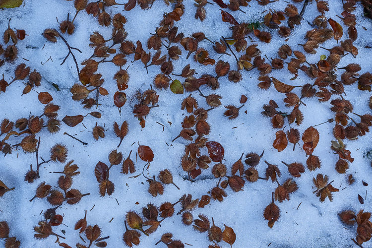 High angle view of dried leaves on snow covered land