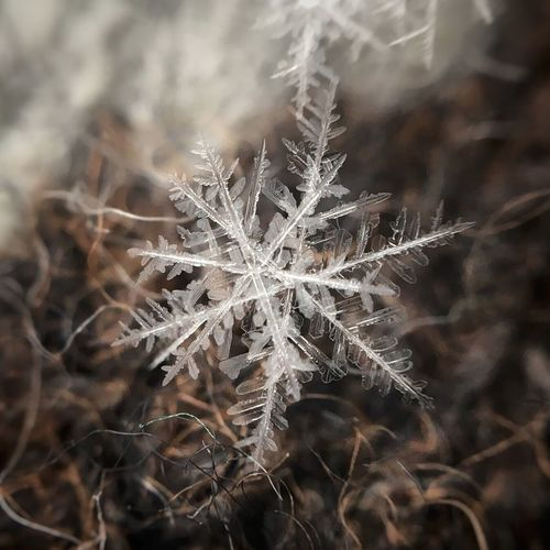 Close-up of snowflake on field