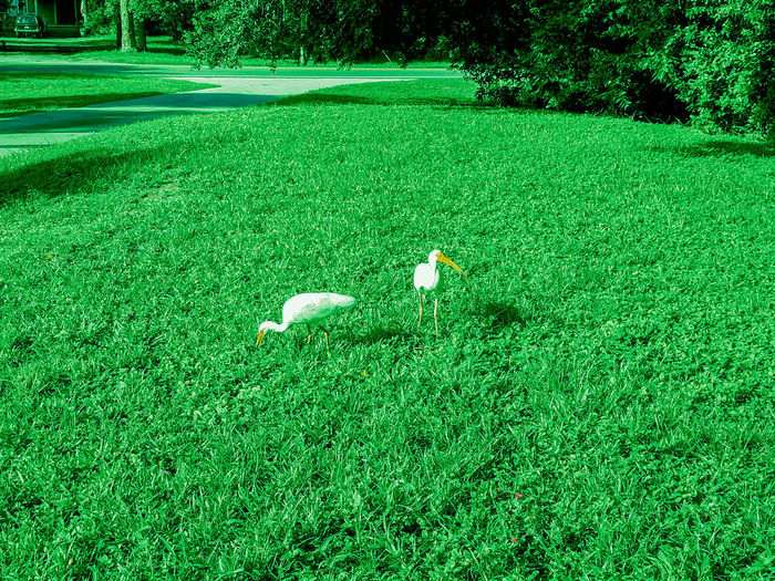 Yard Bird Grass Green Color Nature Growth Day Outdoors Birds High Angle View No People Tree Tranquility Beauty In Nature Landscape Scenics Animal Themes