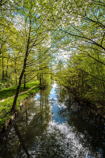 Reflection of trees on water in forest