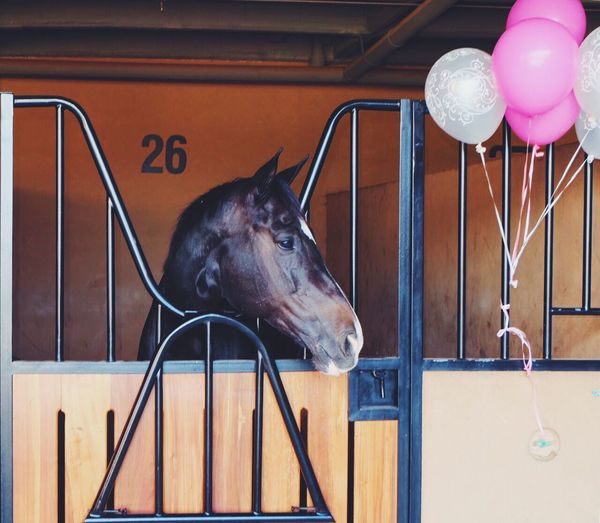 Flowers Stable Animal Animal Themes Domestic Animals Horse Photography  Horse Horses Horse Life Horse Riding