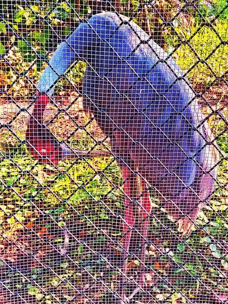 Sarus Crane Flamingo In The Cage Bird In The Cage Animal In The Cage Animal Action Bird Action Flamingo Action Animal In The Zoo Bird Beauty Animal Animal Photography Animal Photography Bird Bird Photography Bird Collection Bird In The Zoo Bird At The Zoo Flamingo At The Zoo Flamingo In The Zoo Flamingo In The Cage Flamingo Photography Flamingo Collection Flamingo Action Flamingo Beauty Flamingo
