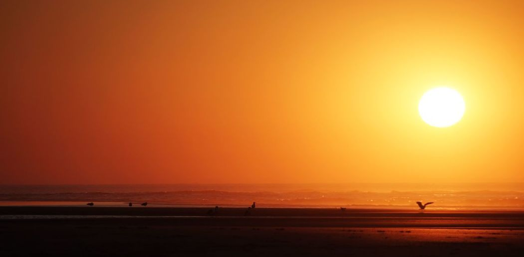 Sunset by the beach Banner Summer Copy Space Nobody Germany Norderney Sunset Sky Sunset Beauty In Nature Sun Orange Color Scenics - Nature Water Sea Tranquil Scene Tranquility Horizon Over Water Beach Silhouette Land Idyllic Nature Horizon Sunlight Non-urban Scene Outdoors