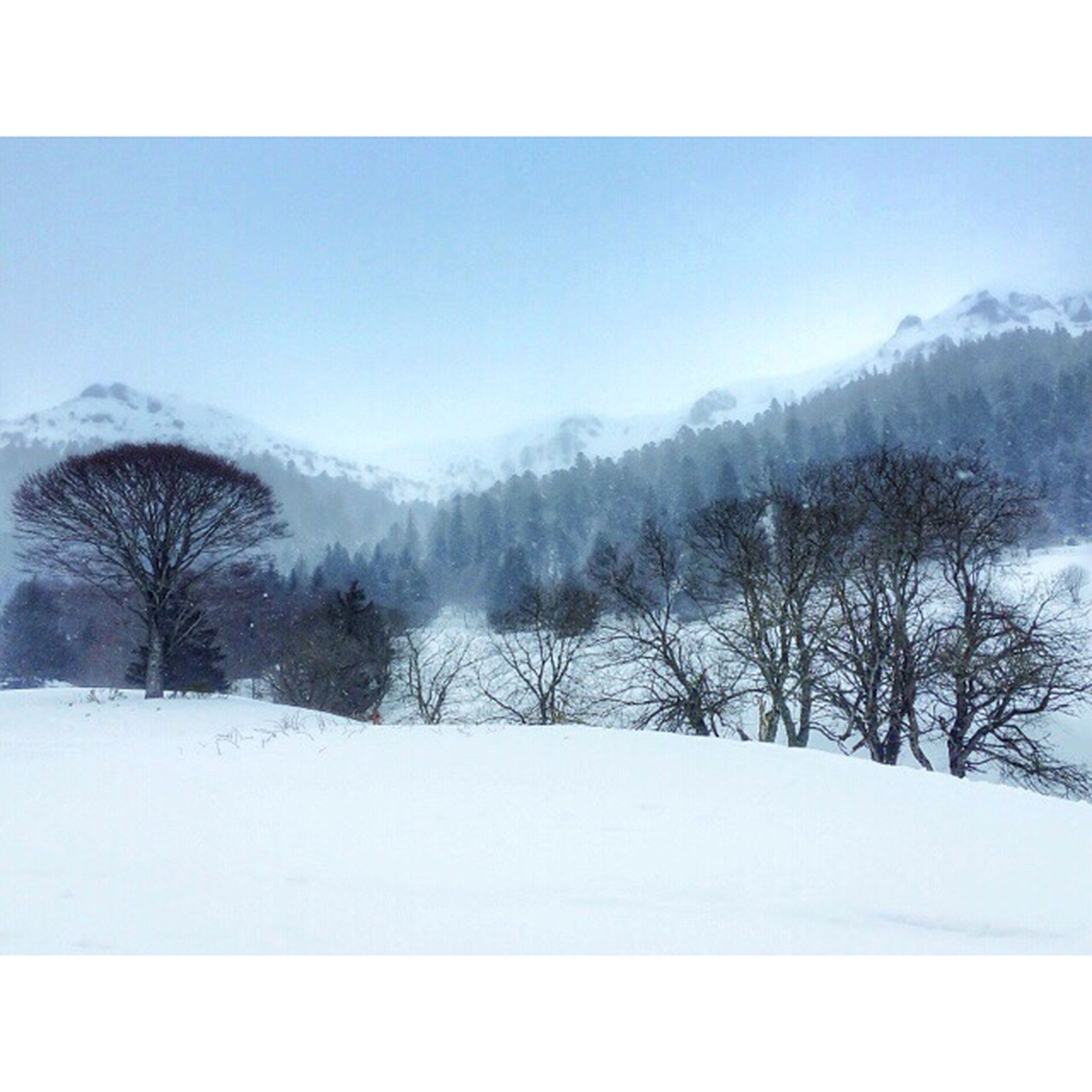 snow, winter, cold temperature, season, weather, tree, tranquil scene, tranquility, covering, landscape, beauty in nature, scenics, bare tree, nature, frozen, white color, field, clear sky, covered, sky