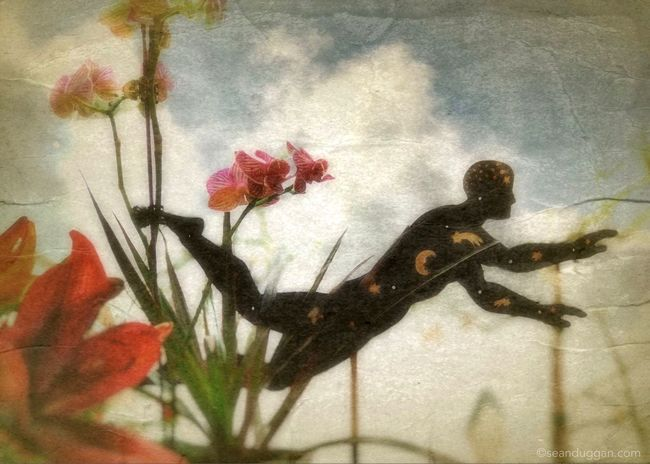 Swimming in the Garden of Dreams Flower Beauty In Nature Dreams Dream Garden Metaphor Swimming Stars IPhonecomposite
