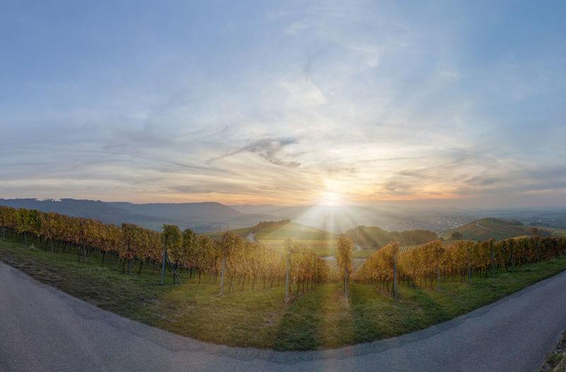 Vineyard at sunset in Michelbach, Germany Autumn Cloud - Sky Hohenlohe Hohenlohekreis Michelbach Nature No People Panorama Panoramic View Sky Sunbeam Sunlight Sunset Tree Vine Vineyard Vintner Wine