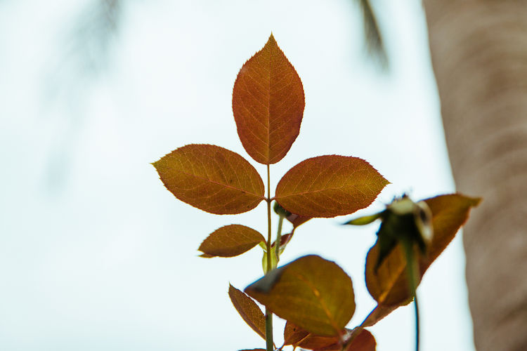 Low angle view of plant leaves against sky