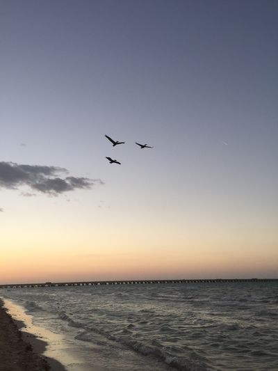 Flying Sea Bird Sunset Scenics Water Nature Beauty In Nature Tranquility No People Horizon Over Water Animals In The Wild Clear Sky Sky Outdoors Animal Themes Day Flying Home Flyingbirds Beach Day Flying Over Your Imagination Flying Bird Beachphotography Flying In The Sky Flying High