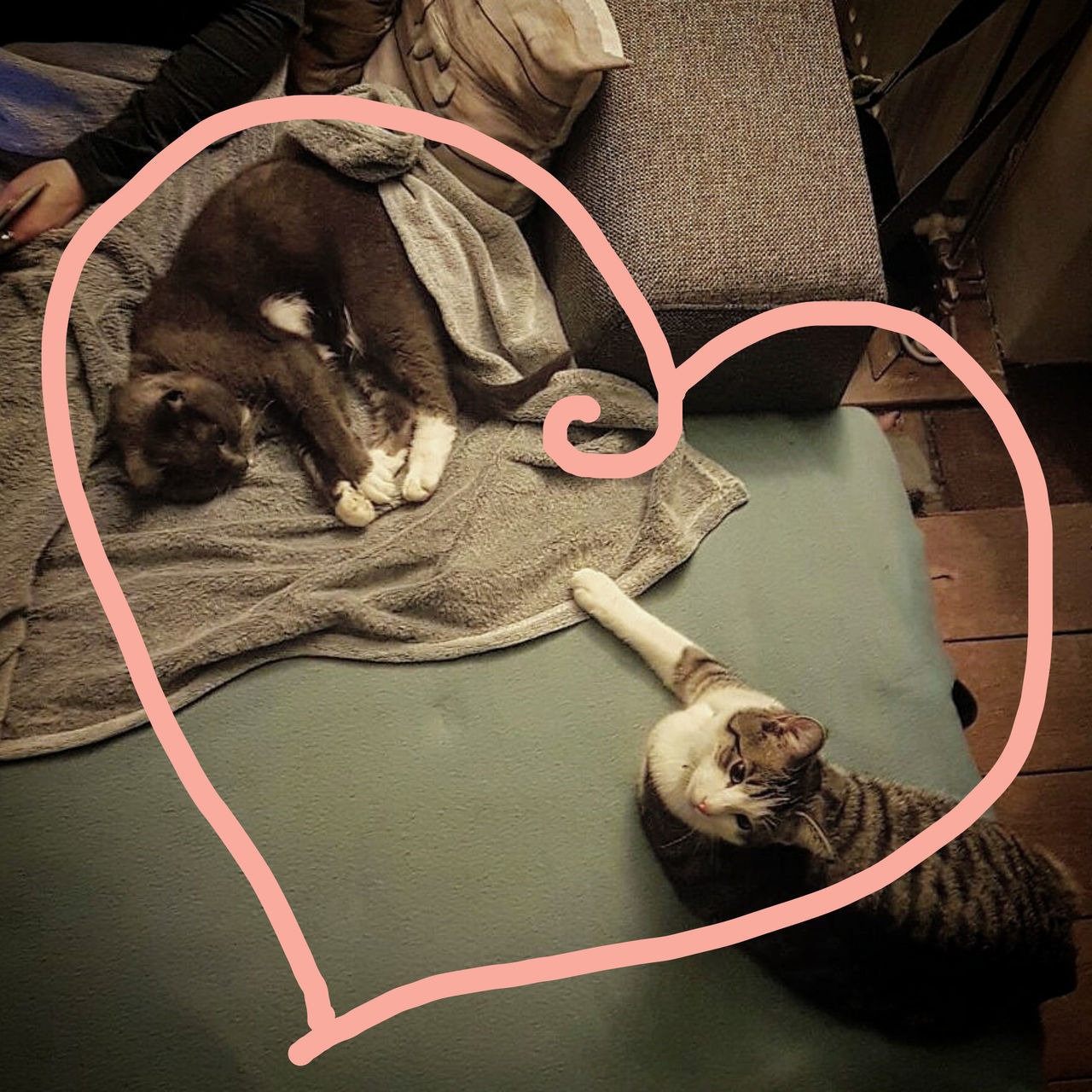 pets, domestic cat, domestic animals, mammal, animal themes, one animal, feline, cat, eyes closed, dog, indoors, relaxation, whisker, cable, lying down, sitting, no people, technology, day, animal hospital