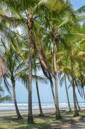 Palm trees at beach against clear sky