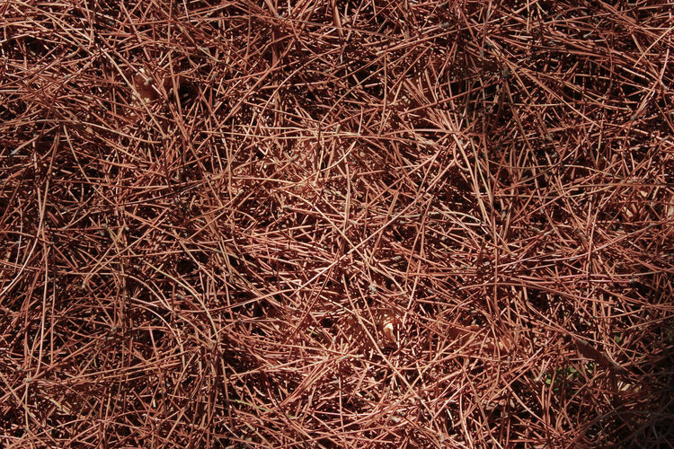 Dry Patern Pine Tree Surfaces Texture