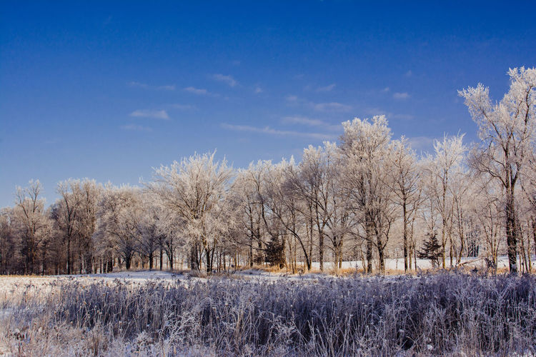 Plant Winter Tree Cold Temperature Sky Landscape Environment Scenics - Nature Nature Land Snow No People Day Tranquil Scene Tranquility Cloud - Sky Beauty In Nature Blue Field Outdoors