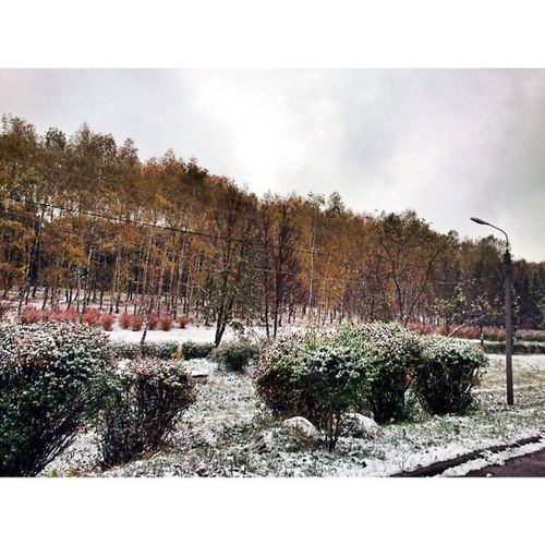 Surprisingly ? Snow Autumn Surprisingly Textbook park cold ignore pic landscape no-no weather us