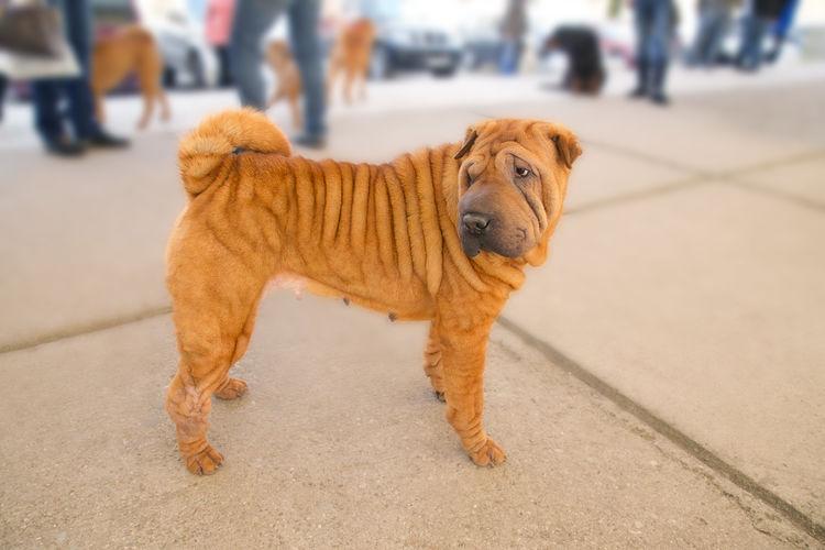 Dog looking away on street