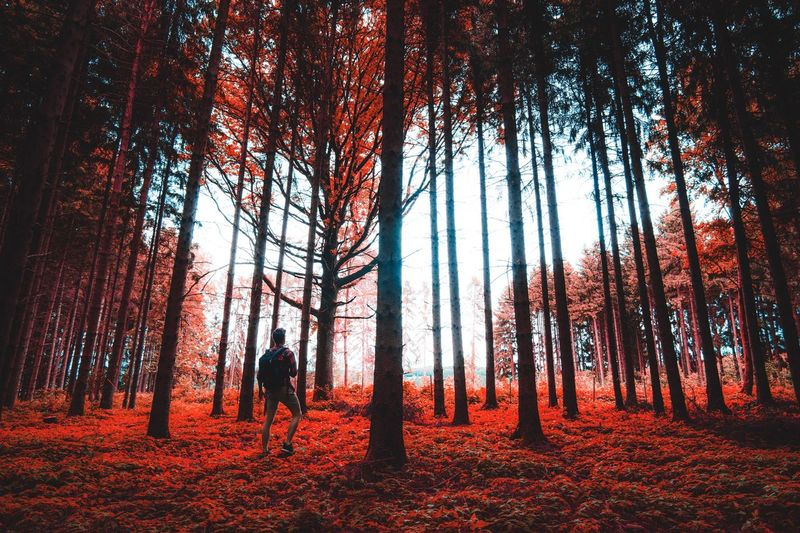 Rear View Of Man Standing Amidst Trees In Forest During Autumn