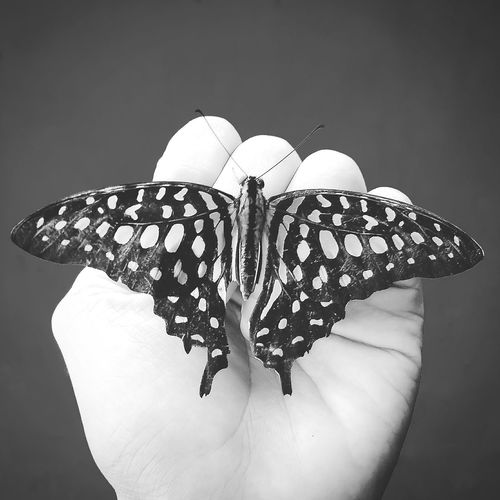 Free and fly, the world greets you kindly #Black&White #Nature  #photography #butterfly Human Body Part Close-up Human Hand One Person Nature