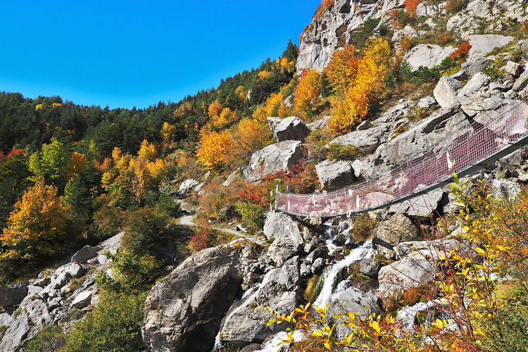 Trees growing on rock against sky during autumn