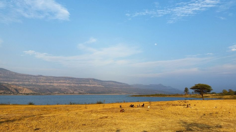 Sit Quiet & Enjoy, Natures Playground...☺ Landscape Tranquility Outdoors No People Water Blue Sky Beauty In Nature Scenics Nature Lake India Nature_collection Places I've Been Traveller EyeEm Nature Lover Eyeempicoftheday Indianpictures Maharashtra Travel Indian Wanderlust Mountain Wildlife & Nature Beauty In Nature Picoftheweek