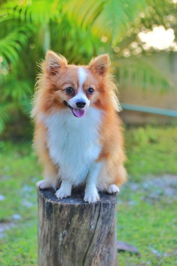 Portrait of dog on wooden post