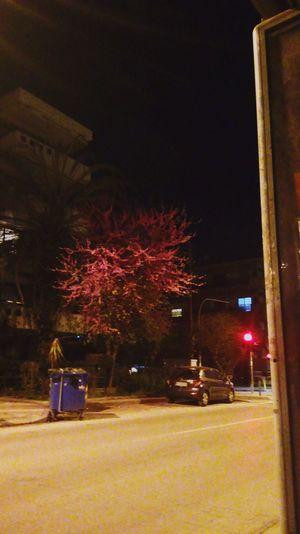 Illuminated Urban Urbanphotography City Nightphotography Nightshot Tree Spring No People Night Lights Growth Redlight No Traffic Night