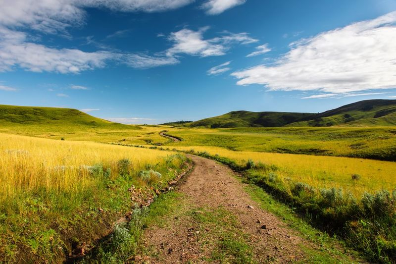 Lush Landscape Environment Scenics - Nature Sky Tranquility Plant Beauty In Nature Tranquil Scene Cloud - Sky Rural Scene Field Green Color No People Yellow Non-urban Scene Agriculture Growth My Best Photo
