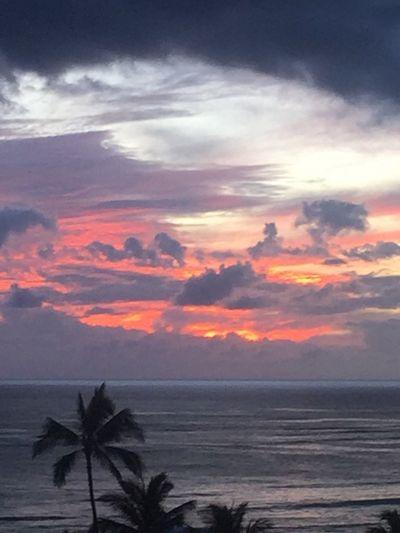 Waikiki Sunset Palm Trees 🌴 Tropics Oahu / Hawaii Oahu, Hawaii Oahu Sunset Island Of Oahu, Hawaii Waikiki Beach Waikiki Pacific Ocean Sky Pacific Sunset Pacific Ocean View Silhouette No People Cloud - Sky No Edit/no Filter An Eye For Travel The Great Outdoors - 2018 EyeEm Awards