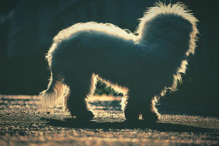 Goodbye Sunshine.. Pets Sunshine Warm Warmday Dog Goodbye Emotions Feelings