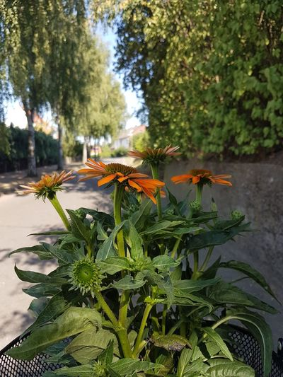 Summertime Tree Plant Life In Bloom Blooming