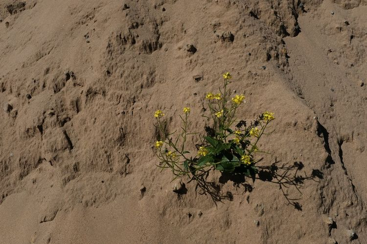 High angle view of flowering plant on sand