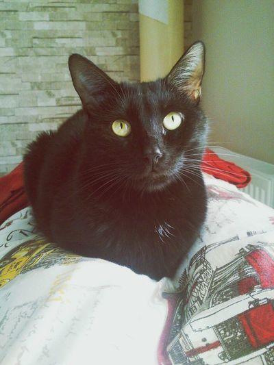 Kediler Kedi Aşkı Cat♡ Relaxing Kedi
