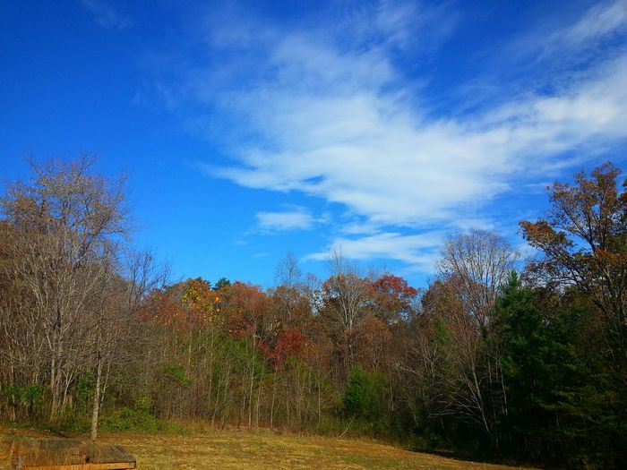 Leaves Are Falling Autumn Colors Gretna, Va Usa Virginia United States Of America David Tupponce Tupponce Photography EyeEm Nature Lover