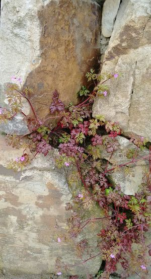 Stone Wall Stones And Flowers Plants Flower Collection Nature No Filter, No Edit, Just Photography Nature_collection Eyem Nature Lovers  Flowers Spring Beautiful Nature Showing Imperfection