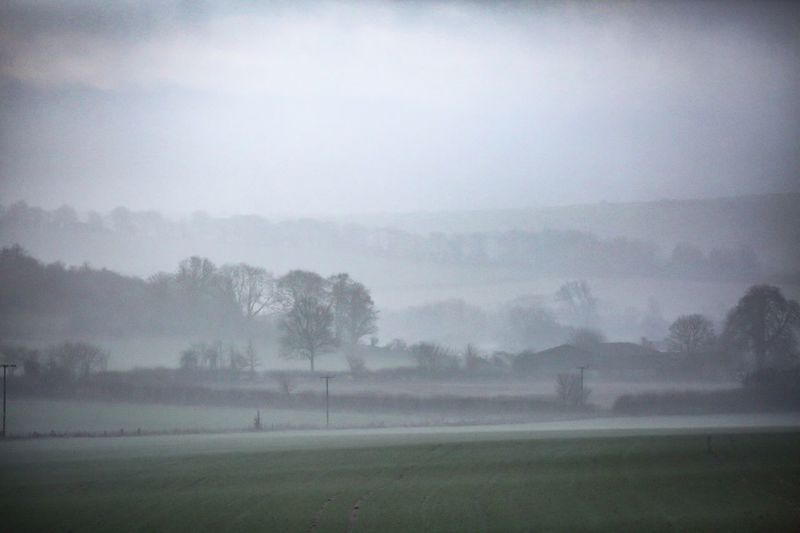 Misty Somerset. Fog Tree Environment Plant Sky Beauty In Nature Tranquility Nature Tranquil Scene Landscape Land Scenics - Nature Morning No People Day Field Idyllic Outdoors