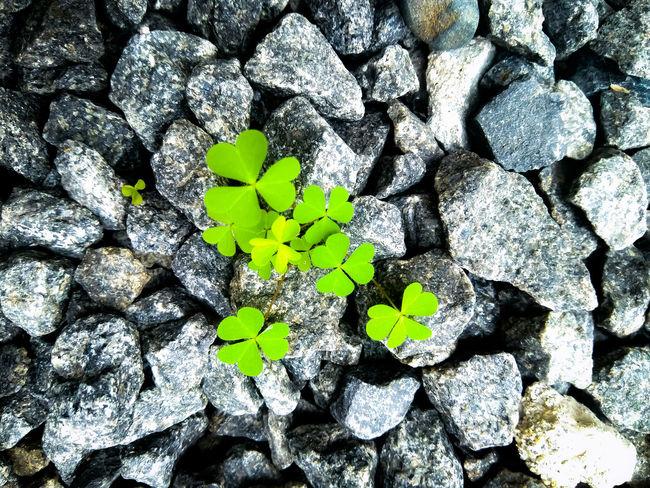 Green Growth Rocks Outdoors Daylight