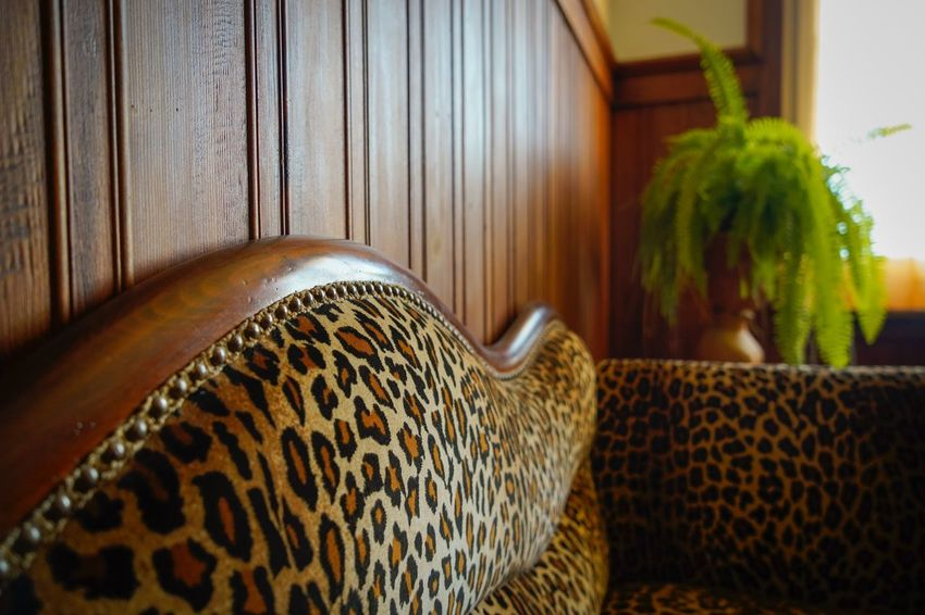 wild waiting two Classic Leopard Couch Indoors  Home Interior No People Pattern Close-up Potted Plant Green Color Animal Themes Furniture Lifestyles Animal