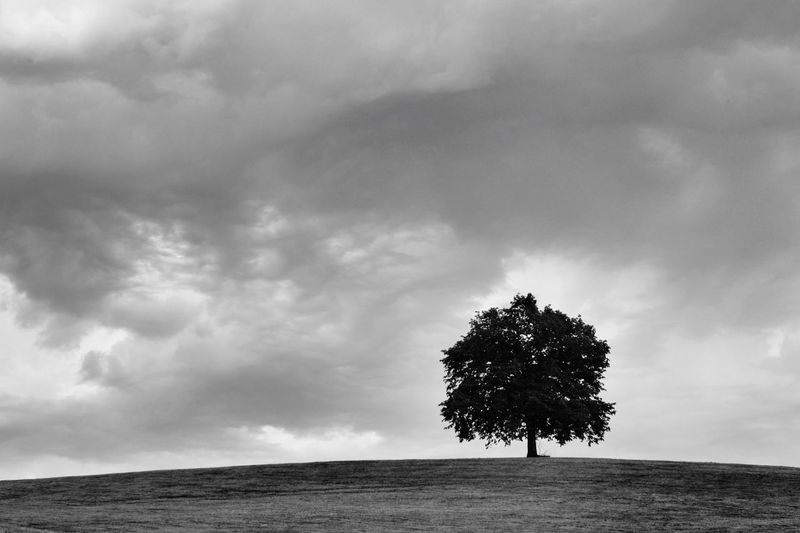 Silhouette Tree On Landscape Against Cloudy Sky