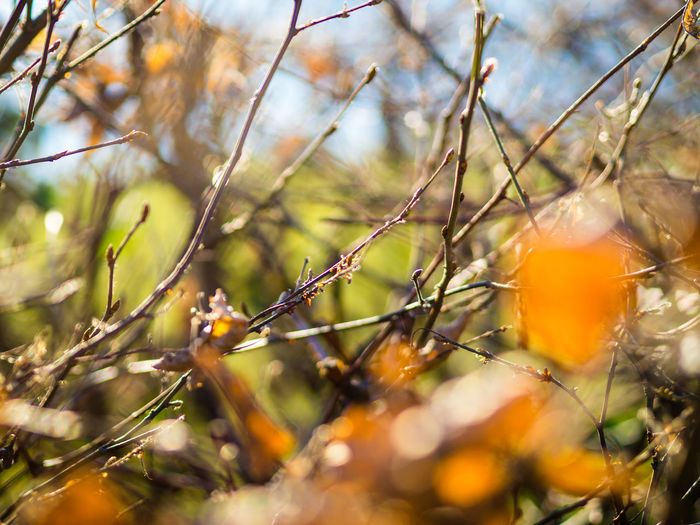 Beauty In Nature Bokeh Bokeh Photography Branch Bush Close-up Day Daylight Focus Fragility Green Nature No People Orange Outdoors