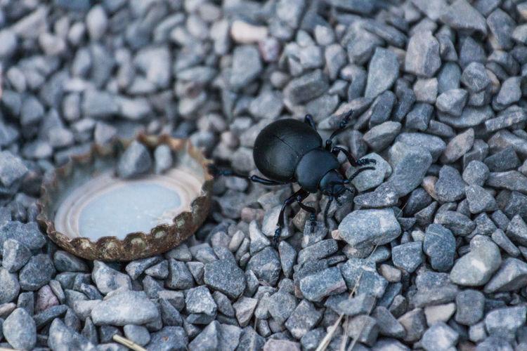 Beach Black