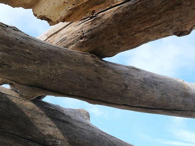 il cielo Alone Tree Contemplazione Solitudini Colorized Tranquility Spiaggia🐚 Elementi Naturali Spiaggia Selvaggia WoodLand Point Of View Beauty In Nature Mountain Desert Extreme Sports Tree Trunk Blue Arid Climate Old Ruin Adventure Rock - Object