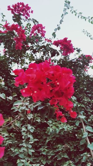 @fleurs