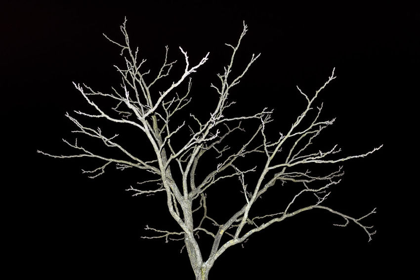 brenches Berlin Tree Winter Black Background Branch Night Colour Your Horizn