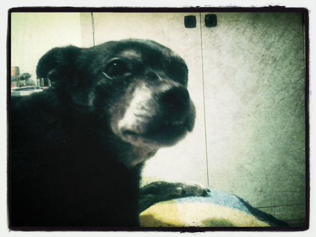 My Little Dog. Her Name's Txiss