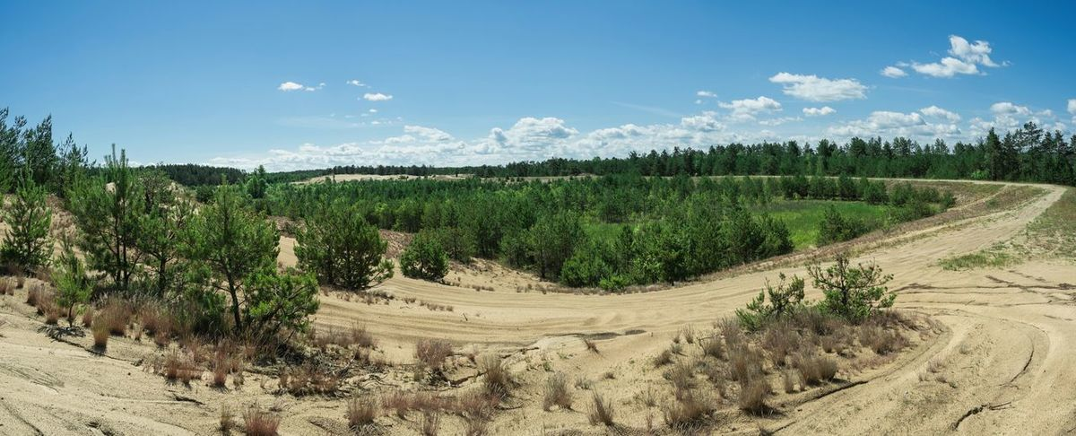 The Great Outdoors - 2017 EyeEm Awards Outdoors Eyeem Photo Nature Lover Sands Landscape Belarus Nature Exceptional Photographs Summer Day By Ivan Maximov Coniferous Forest Forestscape Sky And Clouds Beauty In Nature Our Best Pics Sands And Forest Greenery Freshness Panorama View
