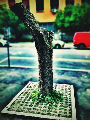 Tree Xperia S