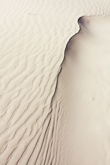 Sand Sand Dune Desert Nature Arid Climate Backgrounds Rippled Outdoors Wave Pattern Archival Landscape Beach Day Beauty In Nature No People Paw Print