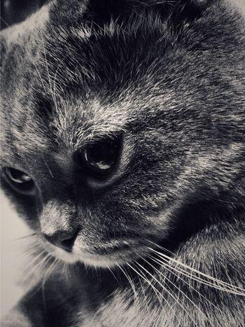 Кузьма. Кузьма кот