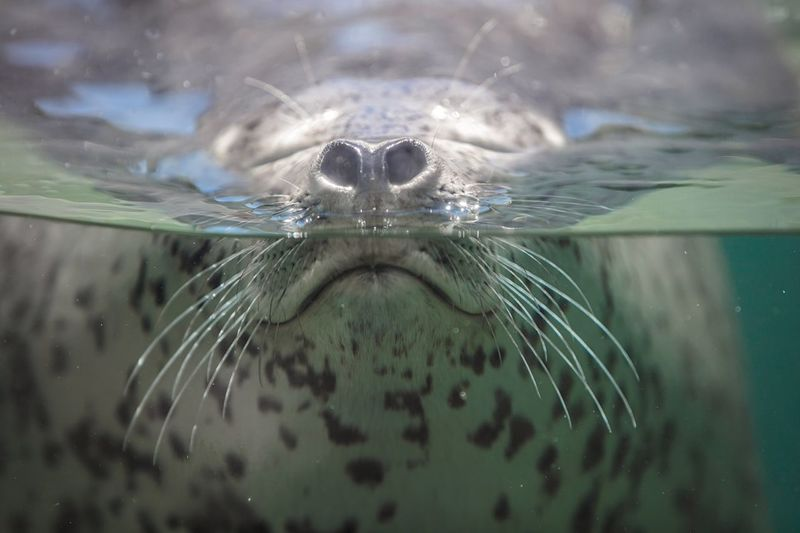 Suma Aqualife Park Bokeh Photography Bokeh Focus On Foreground FUNNY ANIMALS Funny Faces Funny Fun Expression Surface Water Breathing Fresh Air Breathing Breathe Aqualife Aquarium Spotted Seal Seal - Animal Animal Themes One Animal Animal Invertebrate Close-up Selective Focus Outdoors