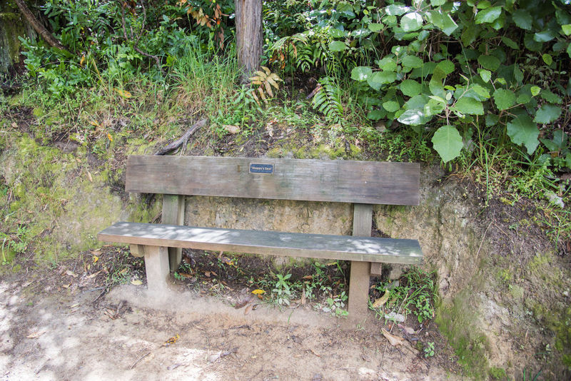 Picton,Marlborough,New Zealand-December 13,2016: Shappy's Seat, memorial bench, along hiking path in Picton, New Zealand Queen Charlotte Track Resting Place Shappy's Absence Bench Craftsmanship  Empty Green Color Growth Land Mountain Nature New Zealand No People Outdoors Park Picton  Plant Plant Part Seat Trail Tree Wood - Material Wooden Woodworking