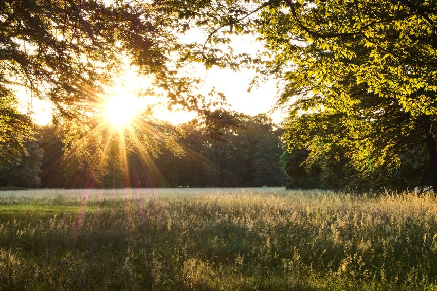 Meadow at Park Branitz Wanderlust Tree Nature Sunlight Sunbeam Sun Tranquil Scene Field Beauty In Nature Lens Flare Scenics Outdoors Sunset Tranquility Summer No People Landscape Idyllic Grass Day Growth