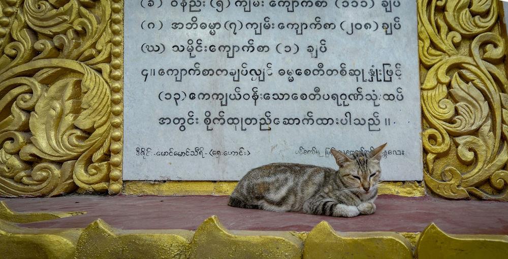 Cat Feline Text